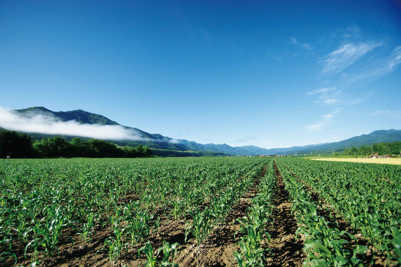 遠軽町,農業,宿泊,コテージ,農業体験